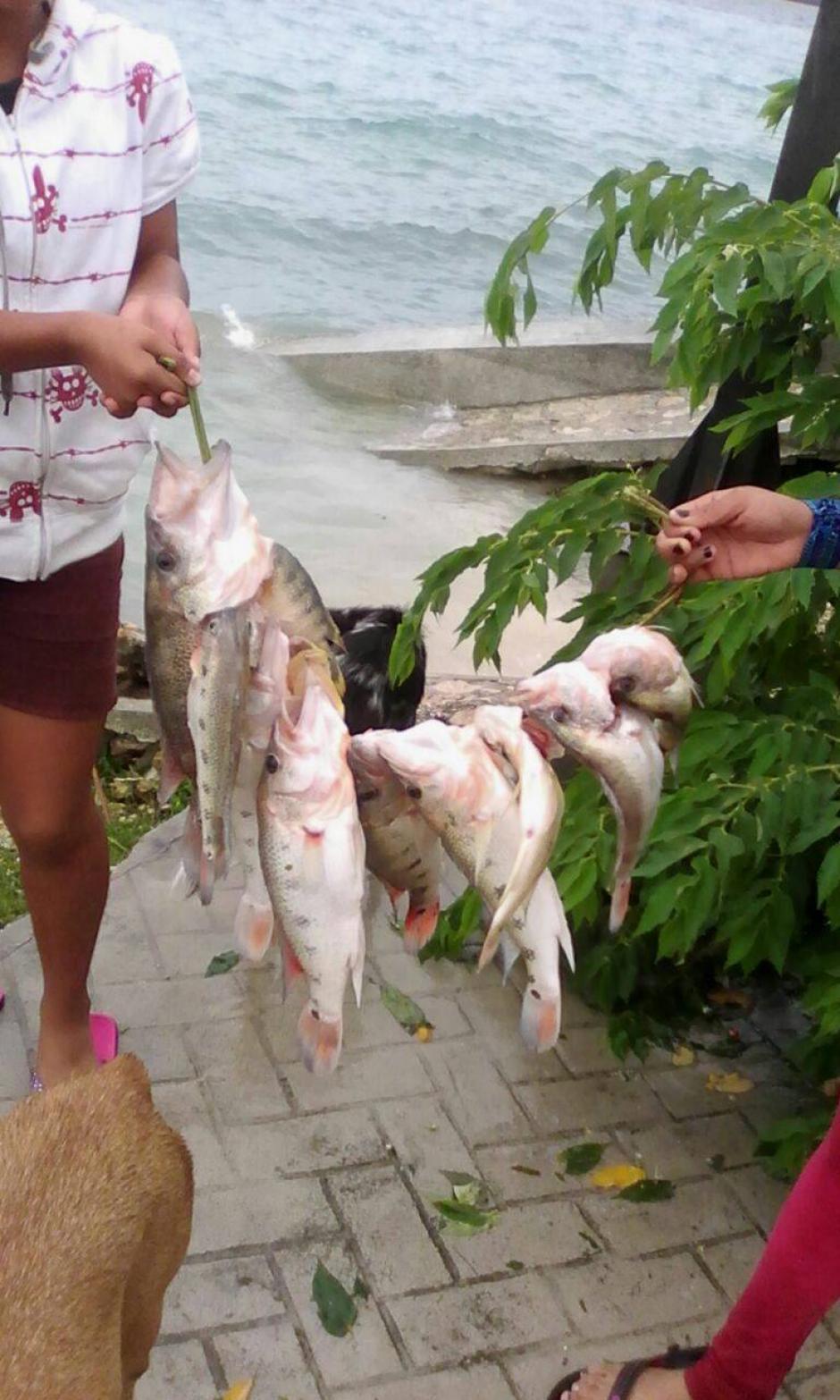 Por el momento esta es la única especie que falleció en el lago de Petén Itzá. (Foto: Facebook, Telenoticias de Petén)