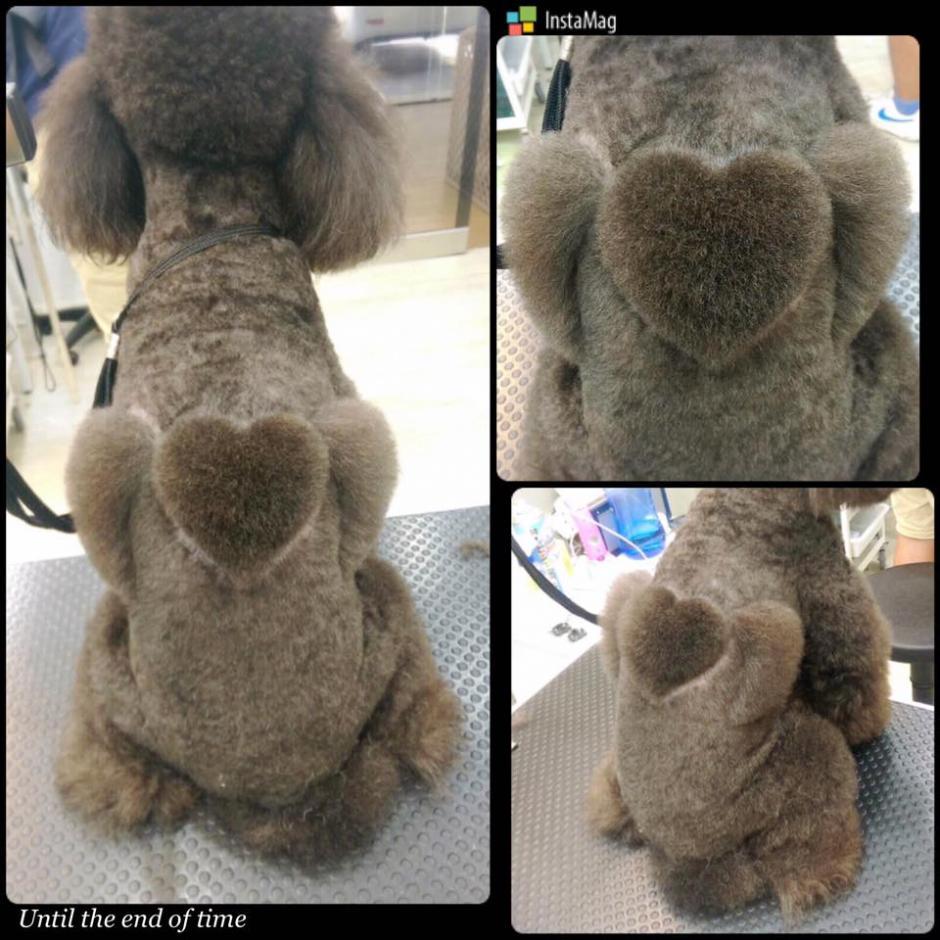 """""""Igogo"""" es el nombre de esta curiosa peluquería de mascotas. (Foto: Igogo)"""