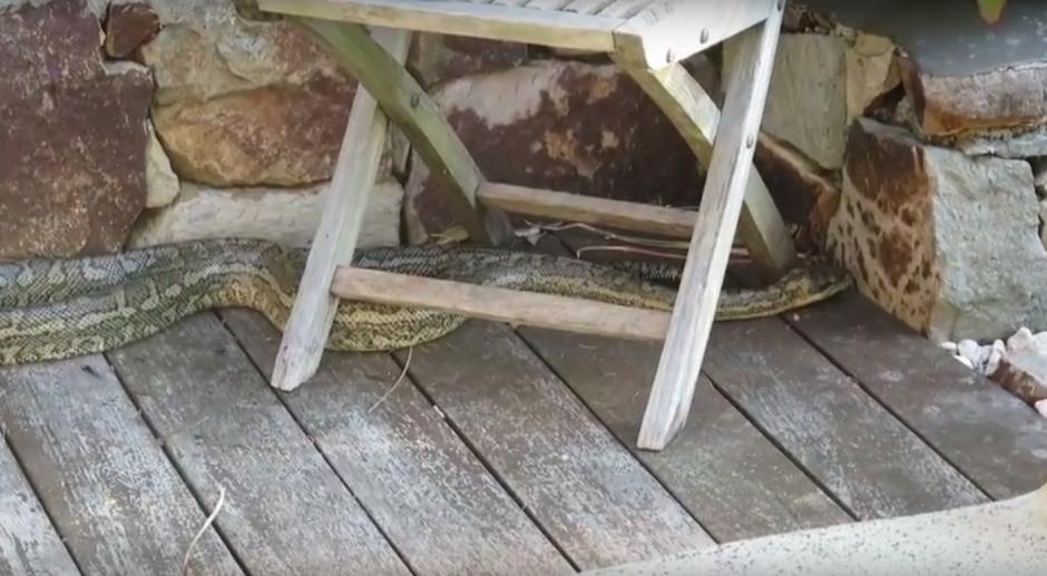 Una de las serpientes se encontraba en la parte baja del jardín de la casa. (Imagen: captura de YouTube)