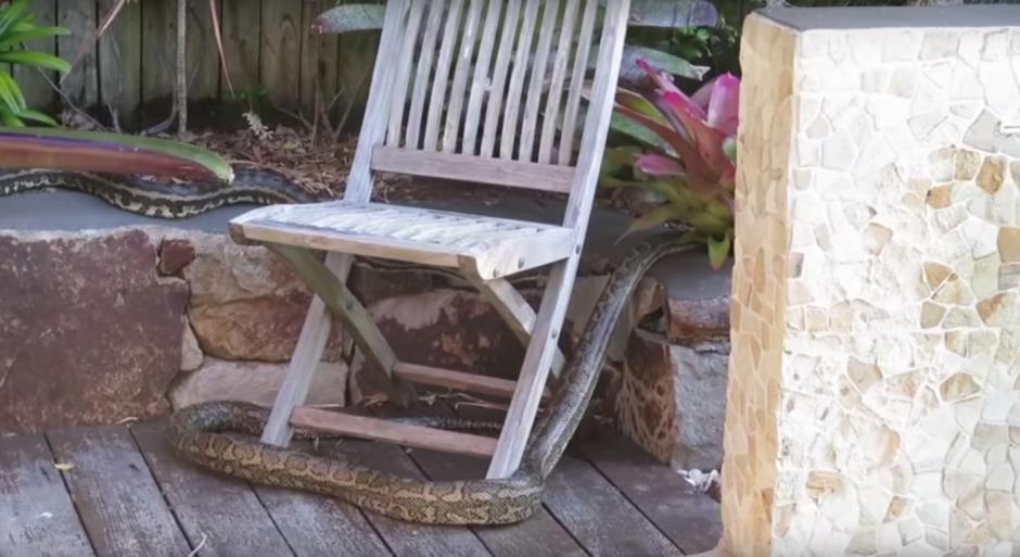 La serpiente agresora se acerca con cautela a la otra. (Imagen: captura de YouTube)