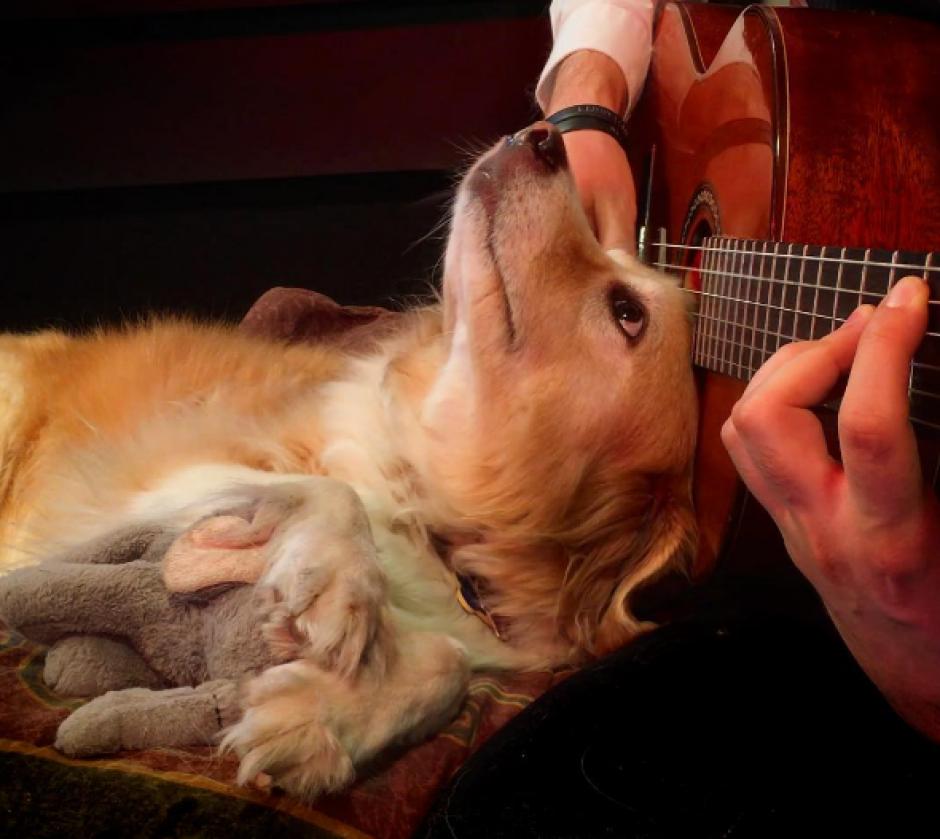A la mascota se le ve tocando varios instrumentos musicales. (Foto: Instagram)