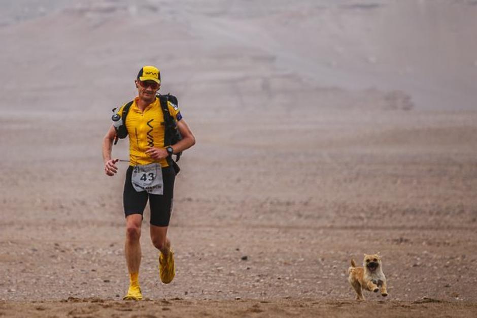 Esta perrita de la calle acompañó a un corredor en una maratón de 5 días. (Foto: La Vanguardia)