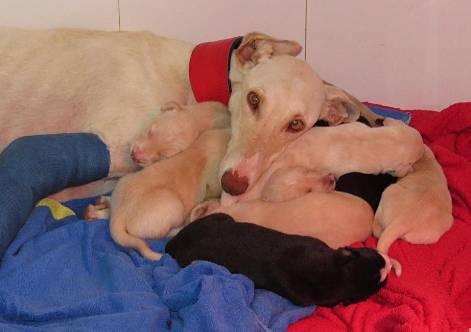 Y está a salvo con sus bebés. (Foto: Clinivet Turre Clinica Veterinaria)