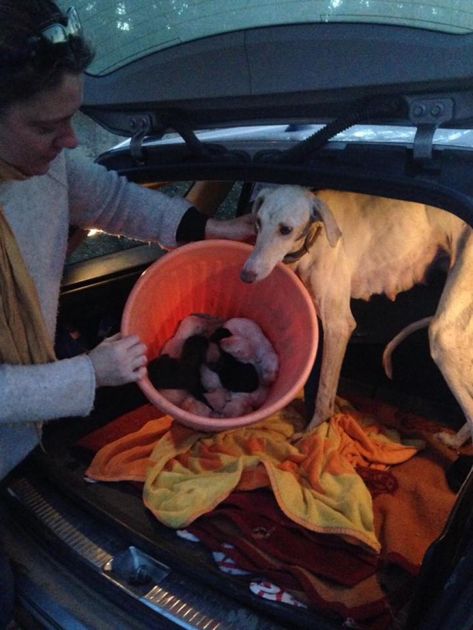 La perrita luchó por que fueran rescatados. (Foto: Clinivet Turre Clinica Veterinaria)