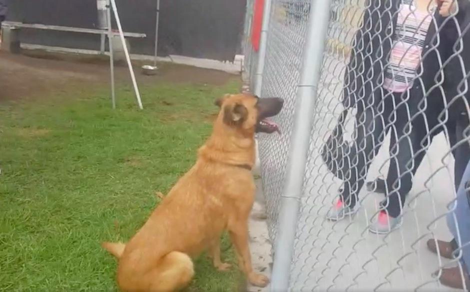 Un perrito reconoció a sus dueños en un refugio mientras ellos buscaban otro en adopción. (Foto: sopitas.com)