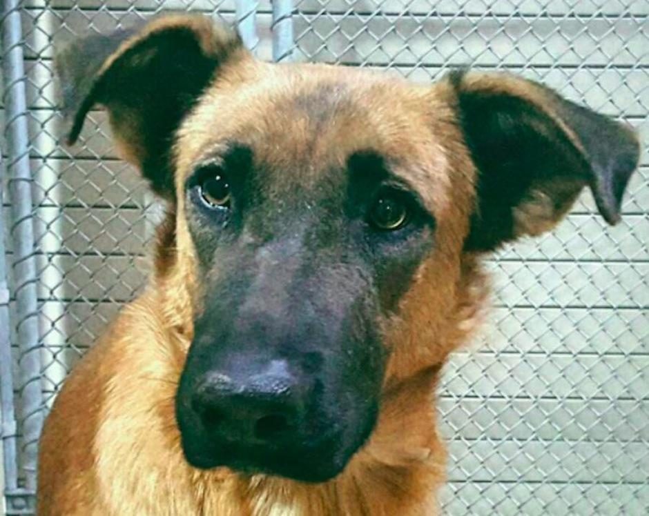 Actualmente está en busca de una familia que la ame como merece. (Foto: sopitas.com)