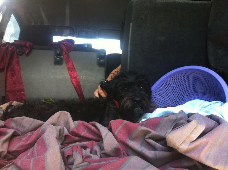 Los riesgos que toma Pet Rescue terminan en un final feliz. (Foto: Pet Rescue Guatemala oficial)