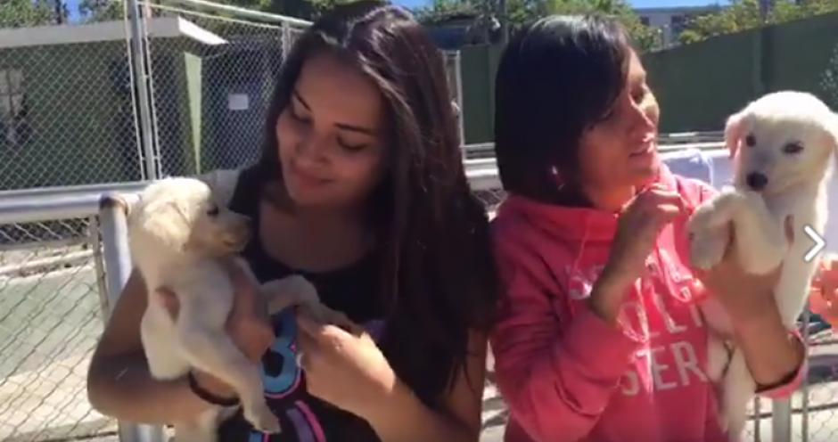 Recibe amor perruno como estas jovencitas voluntarias.  (Foto: Captura de pantalla)