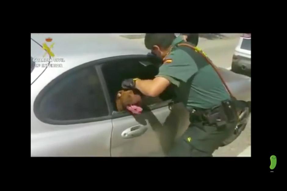 La perra pasó más de 3 horas dentro del vehículo bajo el sol sin ventilación. (Foto: YouTube)