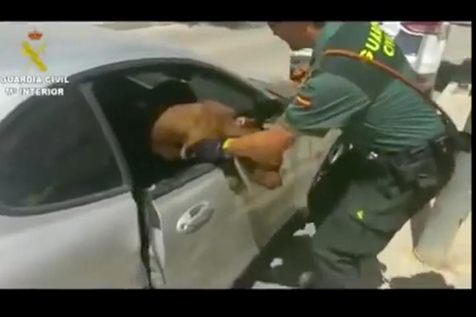 La dueña del vehículo enfrentará cargos por maltrato animal. (Foto: YouTube)