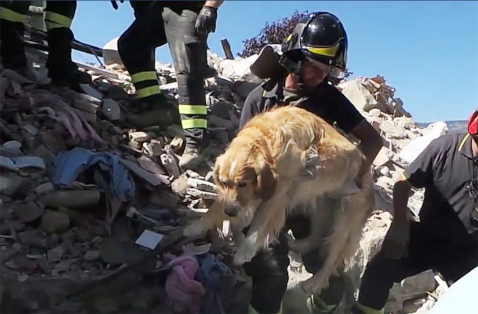 Un perro fue rescatado nueve días después del terremoto en Italia. (Foto: www.cadena3.com)