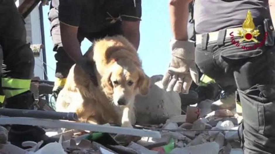 El sismo cobró la vida de más de 200 personas. (Foto: Captura de YouTube)