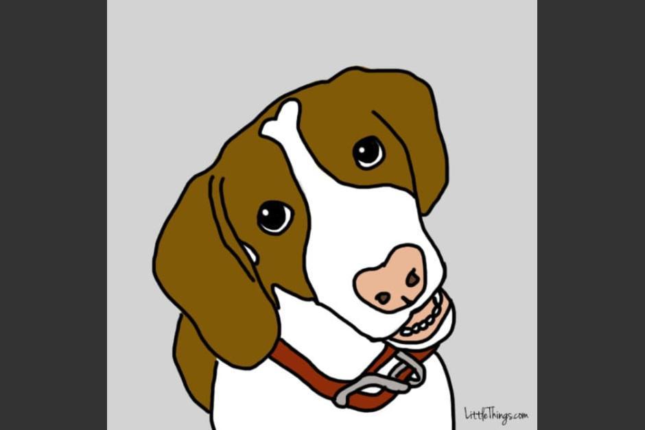 Si tu perro te mira a los ojos es porque quiere conectarse contigo. (Foto: littlethings.com)
