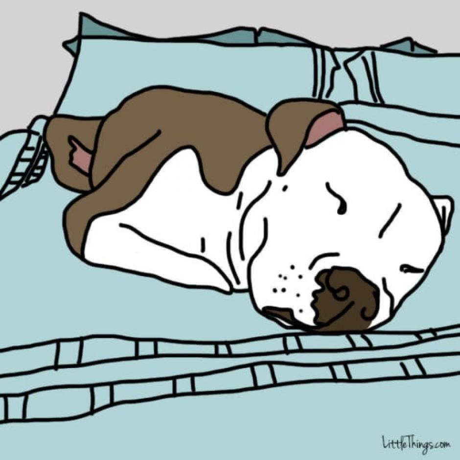 Si un perro duerme en tu cama es prueba de su lealtad. (Foto: littlethings.com)