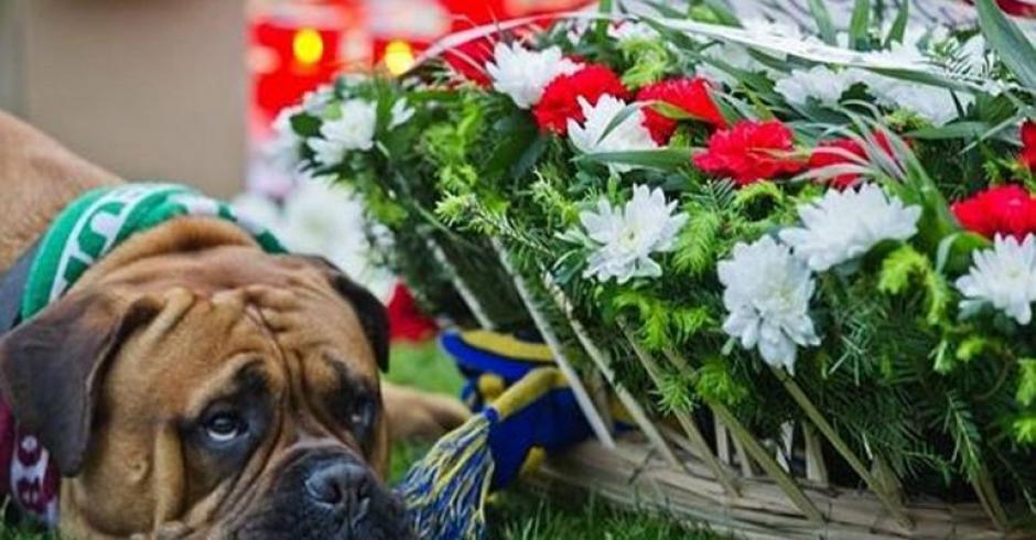Un perro muestra su tristeza en homenaje a futbolista fallecido. (Foto: AFP)
