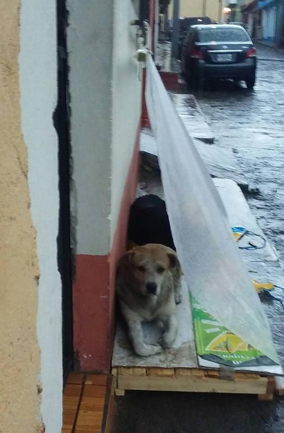 El noble gesto tuvo lugar en Quetzaltenango. (Foto: Facebook/Noemii Morålles)