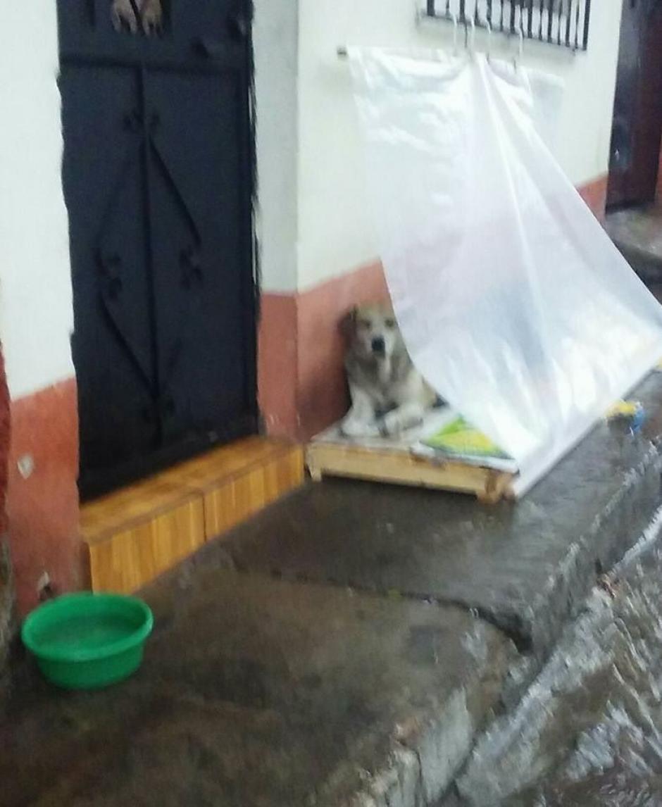 En las imágenes compartidas en Facebook puede verse a dos perros resguardándose de la lluvia. (Foto: Facebook/Noemii Morålles)