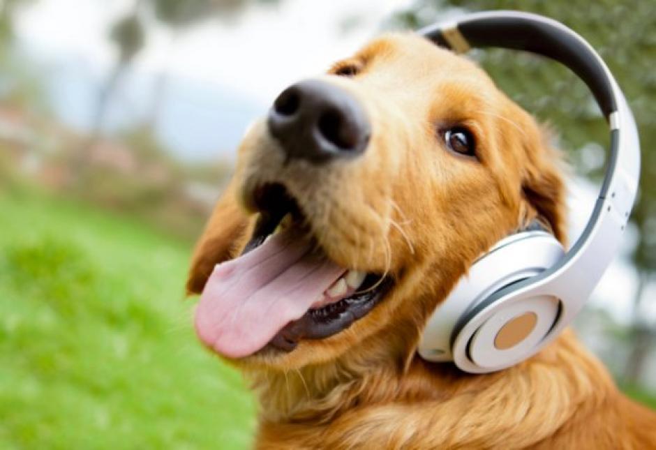 El estudio continuará en búsqueda de las canciones favoritas de los perros. (Foto: Perro Contento)