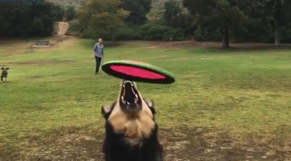 Uno de los perros corre a toda velocidad para atraparlo. (Captura de pantalla: Dailymail)