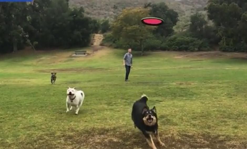 Un hombre juega con sus perros. (Captura de pantalla: Dailymail)