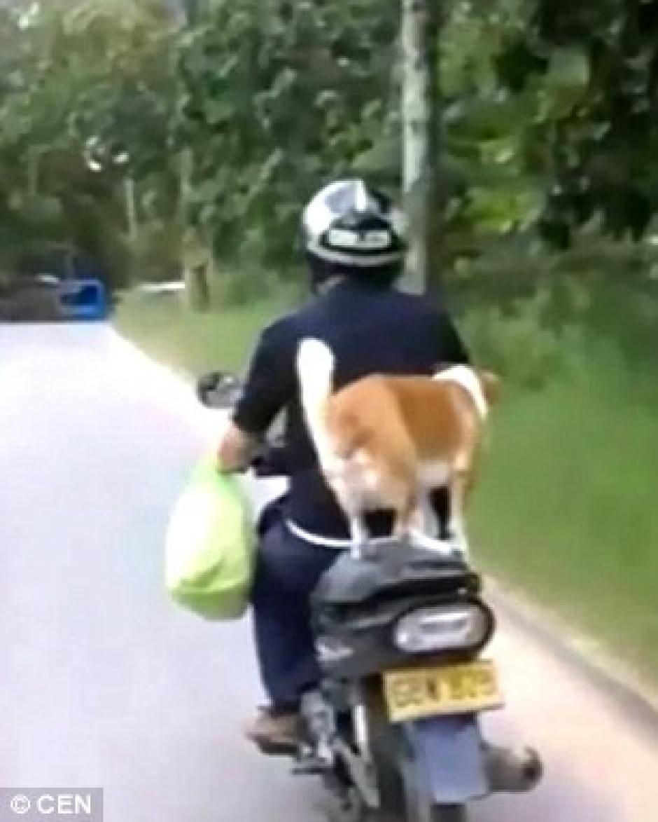 El hombre lleva una bolsa de compras en el brazo izquierdo. (Captura de pantalla: Daily Mail)