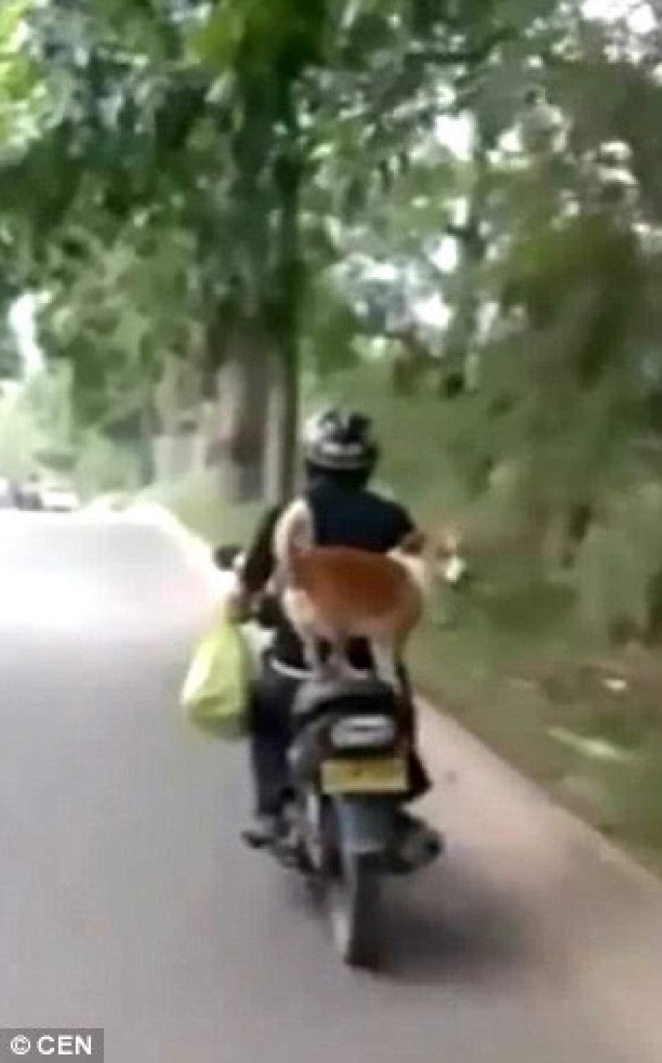 El video que muestra la aventura dura 40 segundos. (Captura de pantalla: Daily Mail)