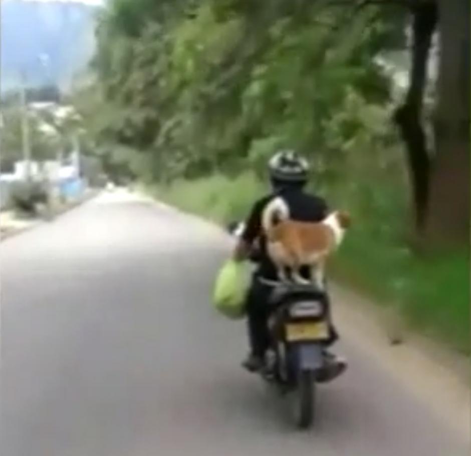Algunos aseguran que el motociclista es un irresponsable. (Captura de pantalla: Daily Mail)