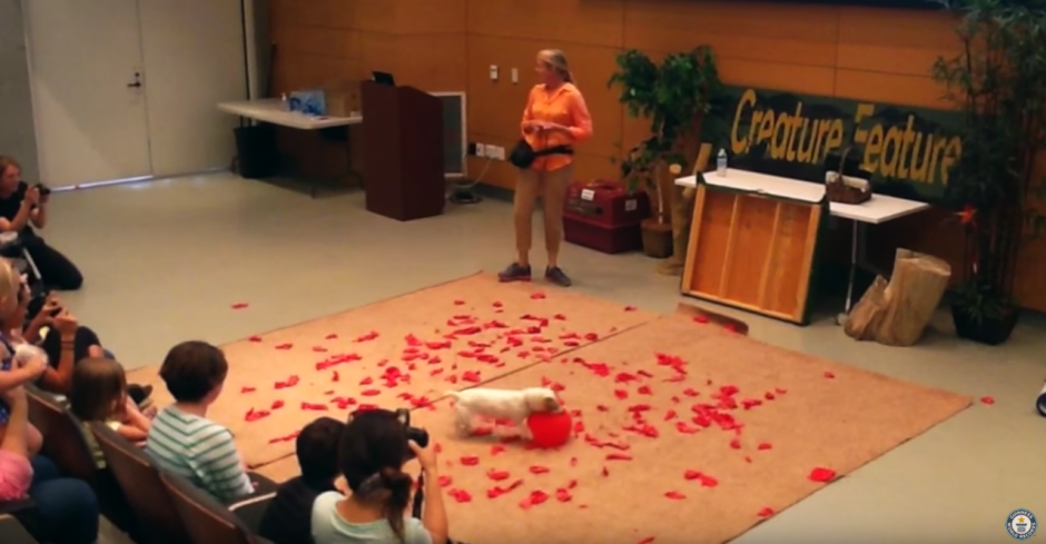 Twinkie es un perro de raza Jack Russel. (Captura de pantalla: Guinness World Records/YouTube)