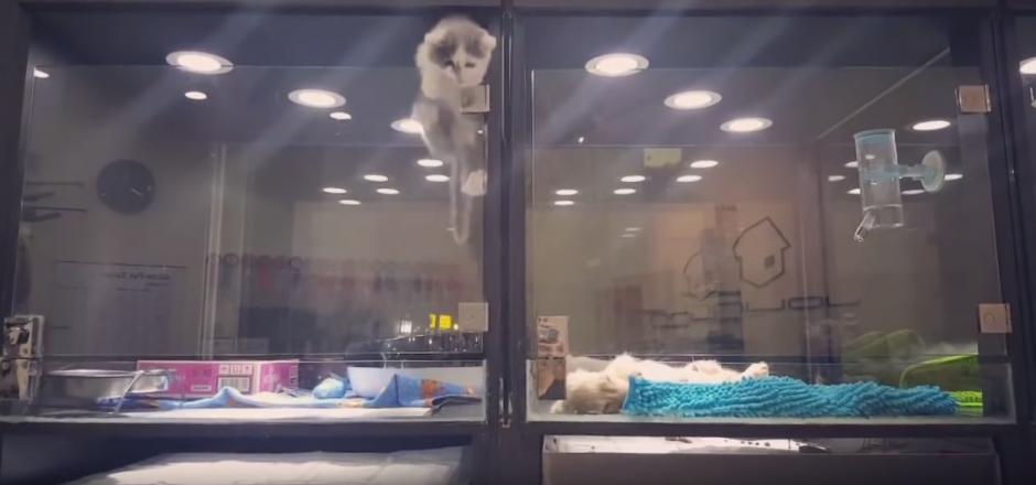 El pequeño animal trepa por el vidrio. (Captura de pantalla: WhatViraling01/YouTube)