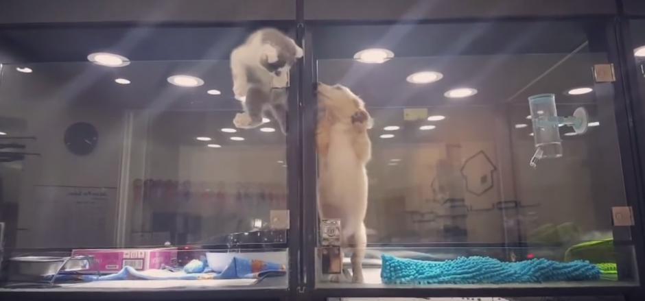 Al lado tiene un cachorro de labrador que lo espera ansioso. (Captura de pantalla: WhatViraling01/YouTube)