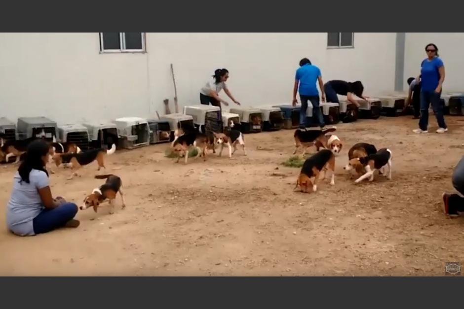 Los perros fueron liberados después de años de encierro. (Foto: Ultimate Video/YouTube)