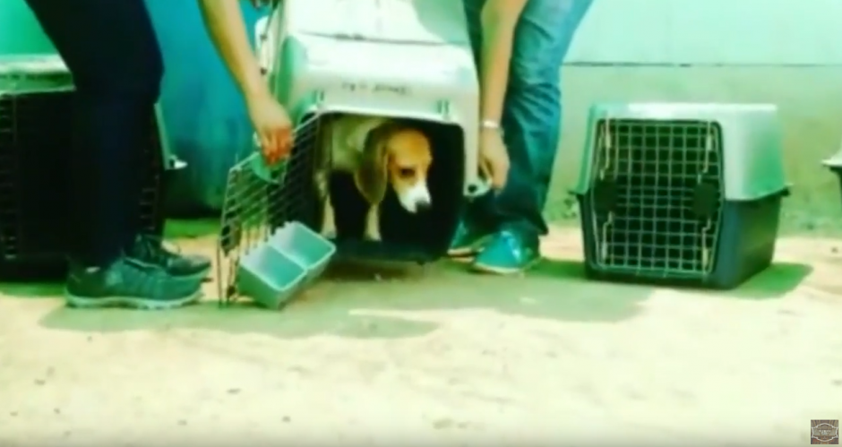 Algunos perros tenían miedo de abandonar las jaulas. (Foto: Ultimate Video/YouTube)