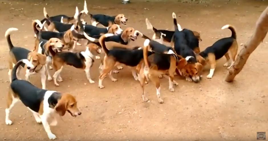 Los perros jugaron por todo el lugar con los objetos que encontraban. (Foto: Ultimate Video/YouTube)