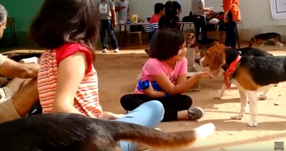 Los perros recibieron felices las caricias de los niños. (Foto: Ultimate Video/YouTube)