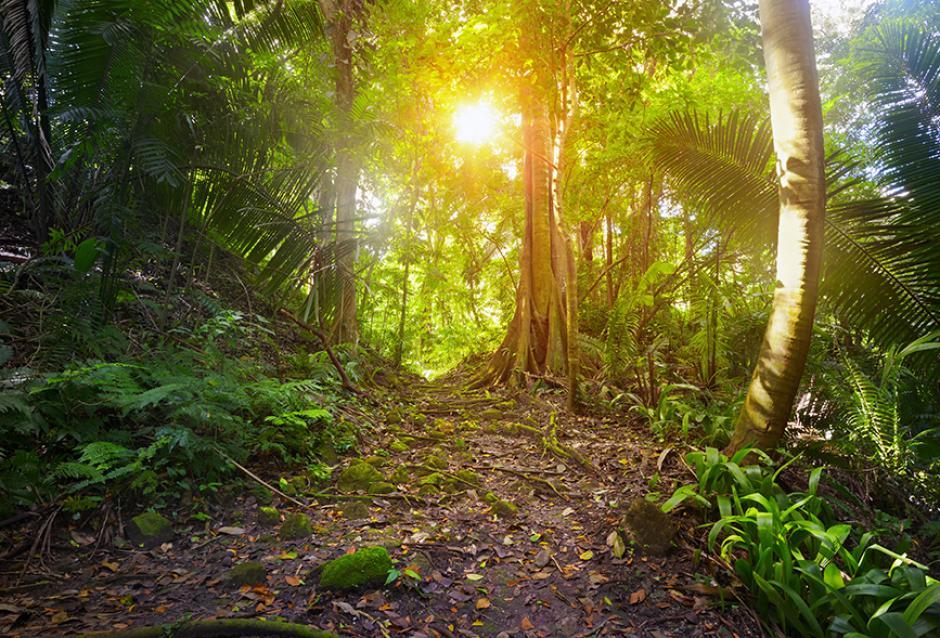 El Parque Nacional de Tikal cuenta con una extensión de 576 km². (Foto: shutterstock)