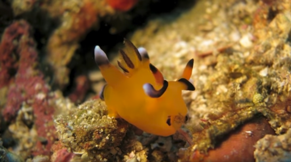 Tiene gran similitud con Pikachú por su color y las manchas. (Captura de pantalla: Werner Kurn/YouTube)