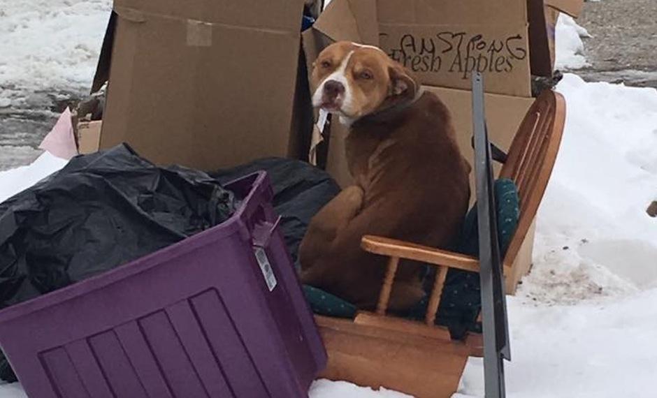 Este perrito se escondió entre la basura para entrar en calor. (Foto: Terry Looby