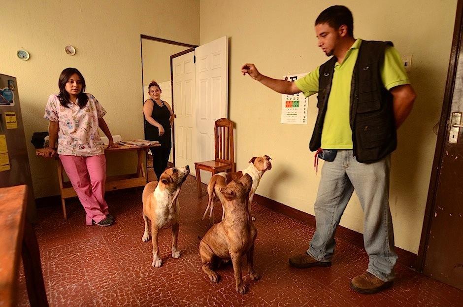 Falcon y Valentina se encuentran en un hogar temporal, donde son sanados física y psicológicamente, previo a ser adoptados. (Foto: Selene Mejía/Soy502)