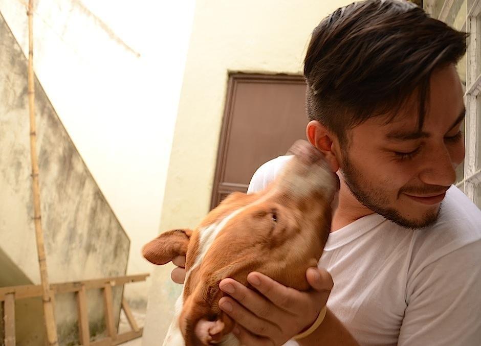 El pitbull es un gran y fiel compañero, poderoso, protector, daría la vida por su familia, es amante de la diversión y es una raza que perdona. (Foto: Selene Mejía/Soy502)