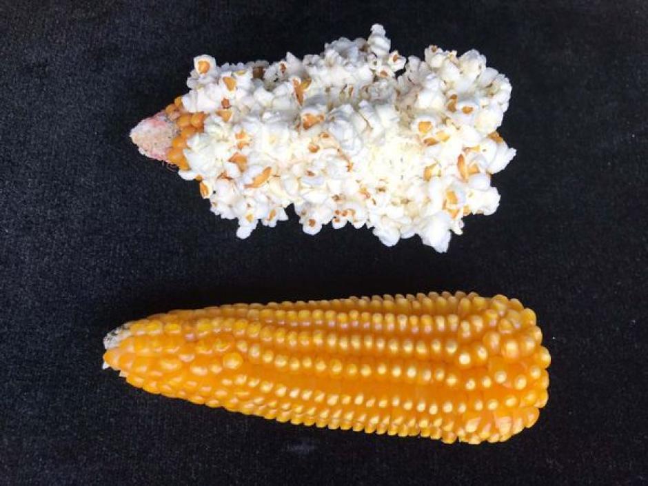 El 1% de palomitas que consumen es originario de su país. (Foto: Archivo)