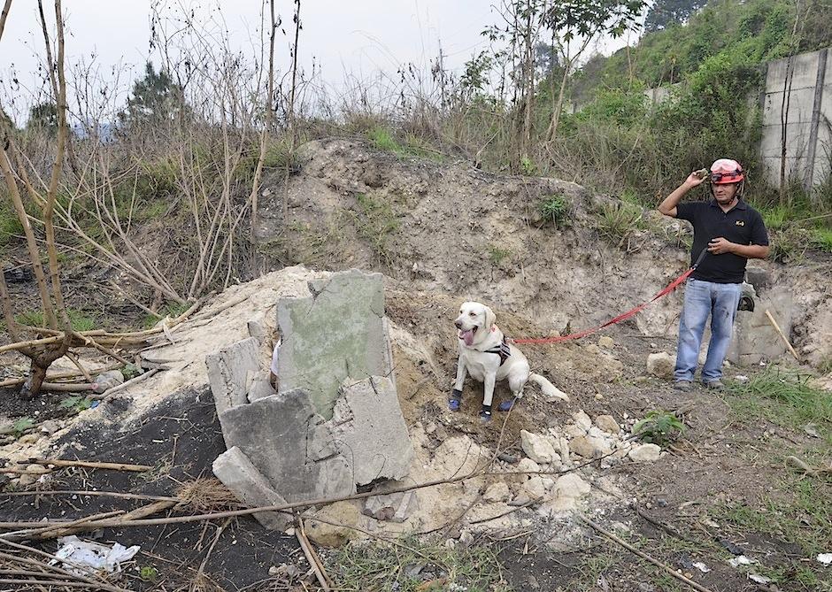 Héctor Orellana es un entrenador de perros de búsqueda. (Foto: Selene Mejía/Soy502)