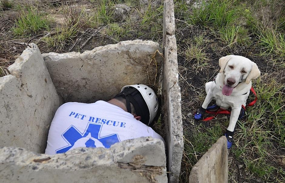 El juego y la caza son parte del instinto canino para buscar. (Foto: Selene Mejía