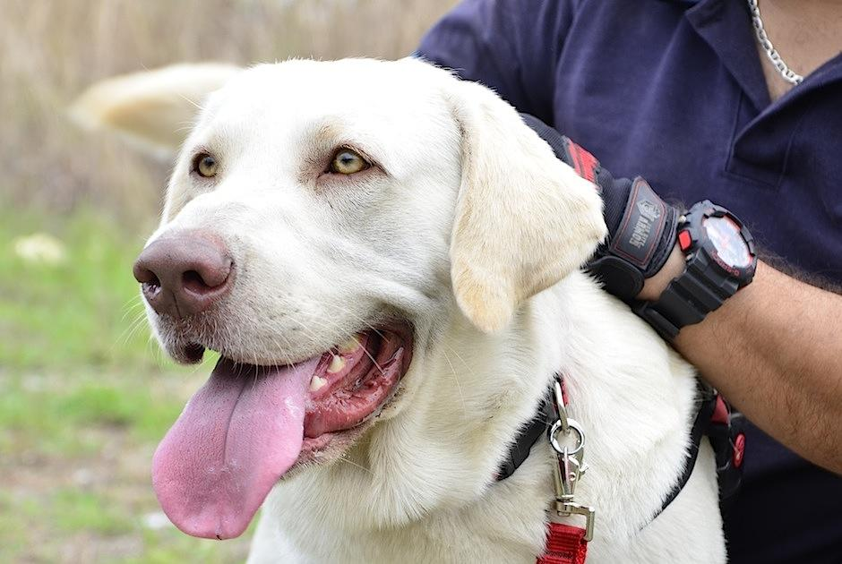 El perrito fue adoptado por los fundadores de Pet Rescue Guatemala. (Foto: Selene Mejía/Soy502)