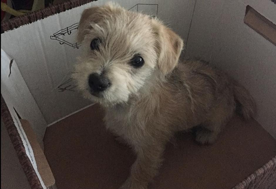 Este tierno cachorro fue abandonado en medio de la carretera. (Foto: Mail Online)