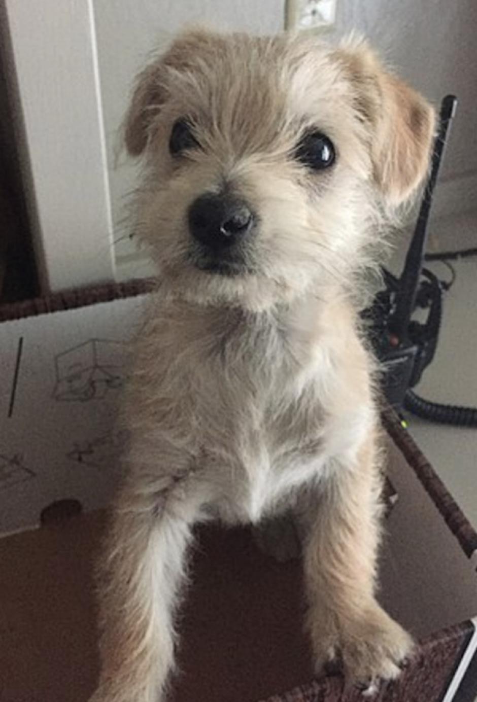 El perrito fue lanzado de un camión. (Foto: Mail Online)