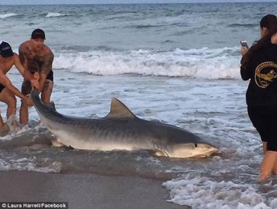 El hecho tuvo lugar en Topsailm Beach en Carolina del Norte. (Captura de pantalla: Clarin)
