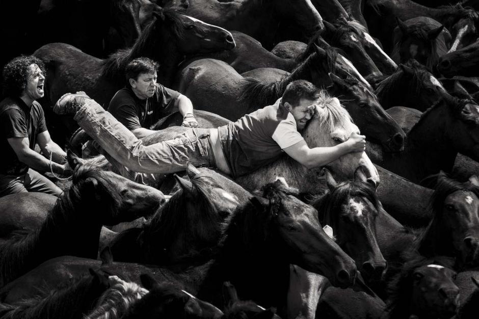 Los habitantes de Galicia luchan cuerpo a cuerpo con los caballos salvajes. (Foto: Javier Arcenillas)