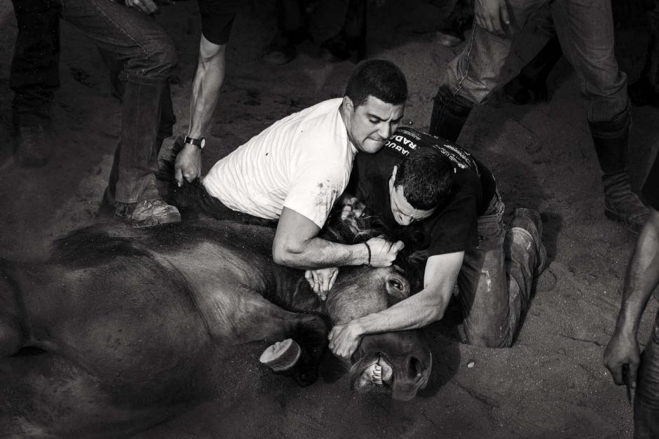 La lucha cuerpo a cuerpo puede durar varios minutos hasta que el animal salvaje es llevado al suelo para cortarle las crines. (Foto: Javier Arcenillas)