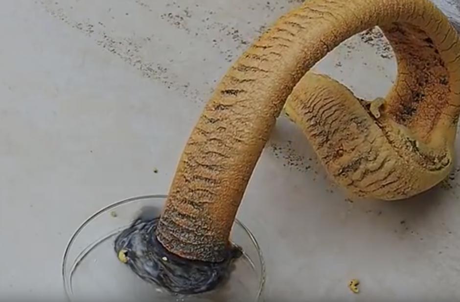 Al final parece una serpiente lo que se formo. (Captura de pantalla: Online Mix Videos)