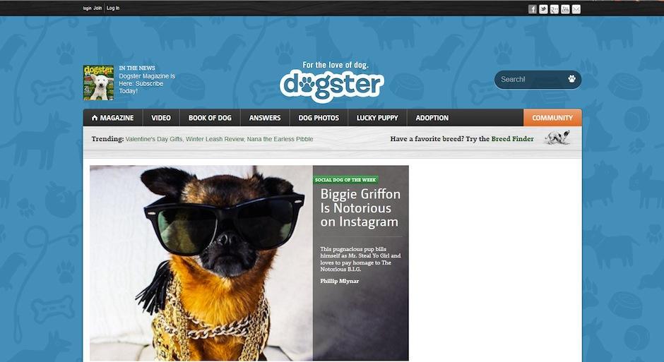 """""""Dogster"""" es una red especial para apasionados de los perros. (Foto: Dogster)"""